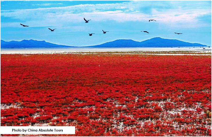 Red Beach, Panjin, Liaoning Province, China