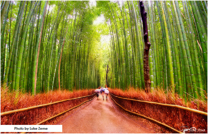 Sagano Bamboo Forest, Arashiyama area of Kyoto, Japan