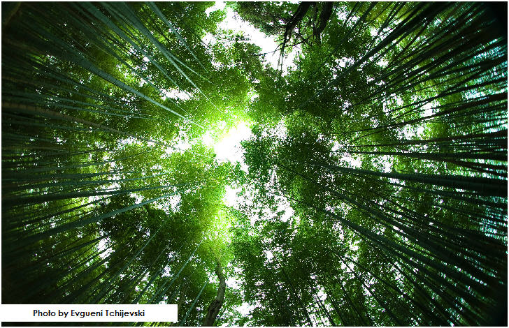 Sagano Bamboo Forest, Arashiyama area of Kyoto, Japan