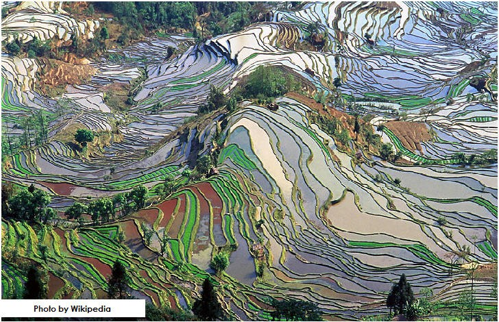 Yuanyang Rice Terraces, Yuanyang County, south of Yunnan Province, China
