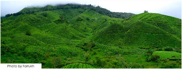 Cameron Highlands, Pahang, 25 must visit in Malaysia