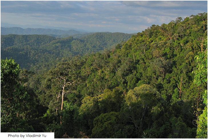Taman Negara, Pahang, 25 must visit in Malaysia