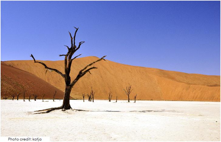 Namibia, Deadvlei, Sossusvlei