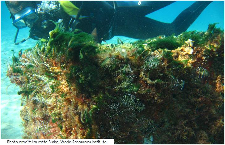 St Lucia Coral Reef, Soufrière area