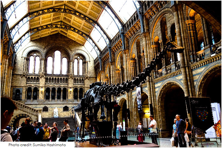 Natural History Museum, 20 Top London Attractions