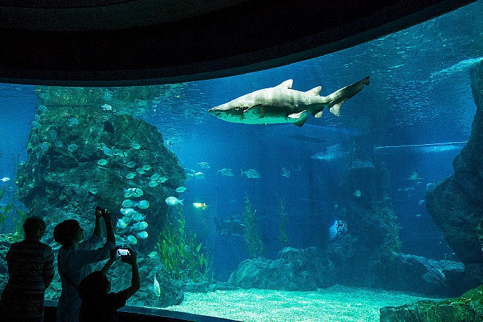 Siam Ocean World, Bangkok