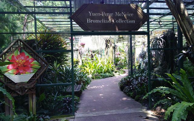 Yuen_peng McNeice Bromeliad Collection
