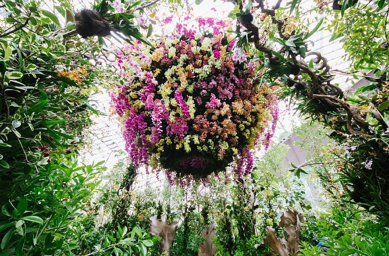Orchid Extravaganza, Singapore Garden Festival 2016
