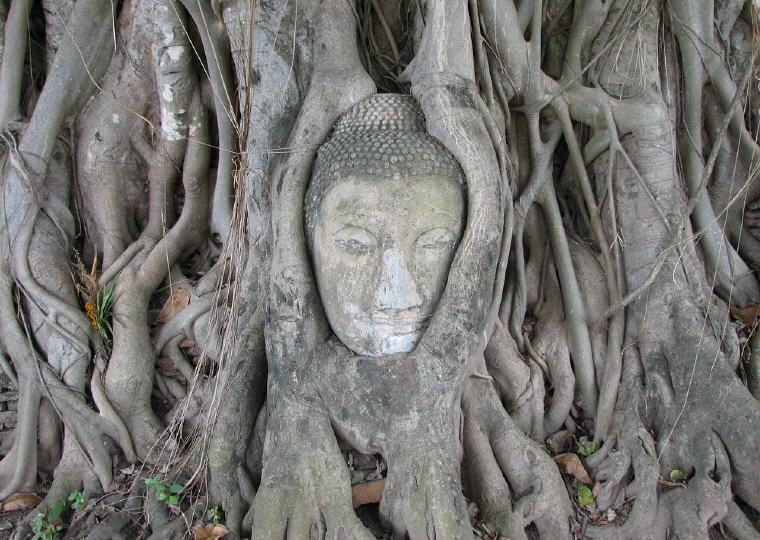 The elegantly carved Buddha head at Wat Maha That, Ayutthaya