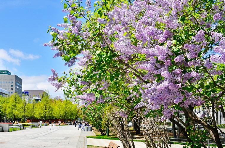 Sapporo Lilac Festival, Welcome to Sapporo