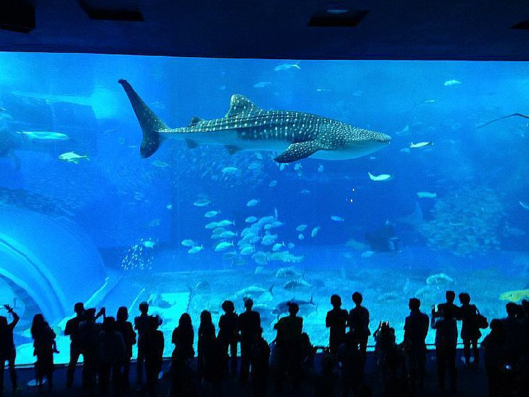 Kuroshio Sea, Okinawa Churaumi Aquarium, 10 emerging hottest destinations to visit in 2018