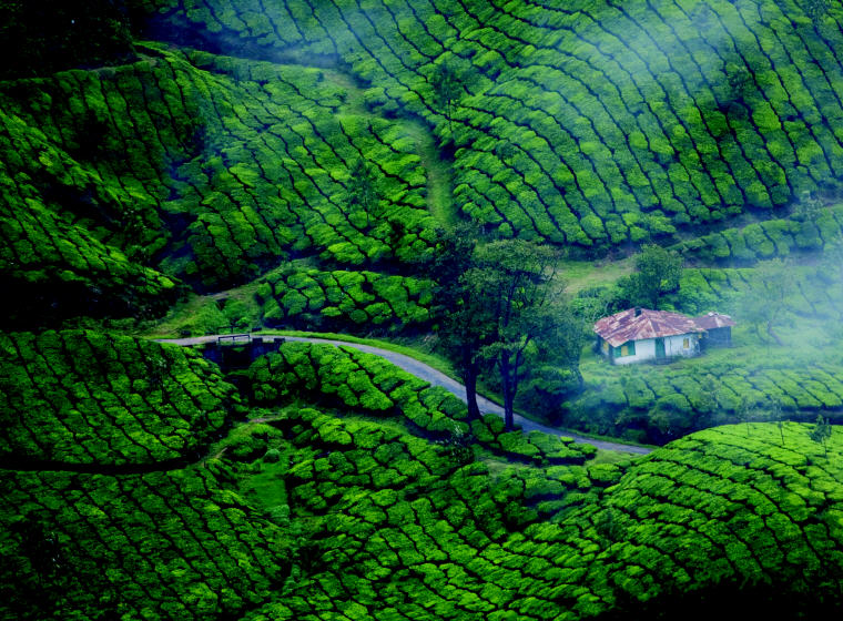 Plantations in Munnar, India, Photo credit, Keralatourism.org, 10 coolest destinations in Asia-Pacific to escape the sweltering heat