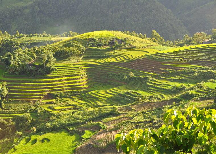 Terraced fields, Sapa, Vietnam, Coolest destinations