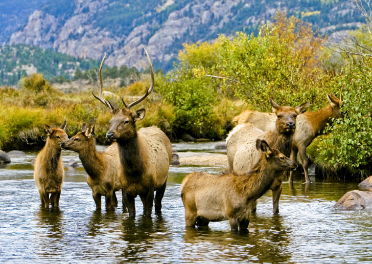 A resident herd of elk in Rocky Mountain National Park in Estes Park, Colorado, Credit: Matt Inden/Miles/Colorado Tourism Office, Top domestic summer vacation destinations U.S. 2017