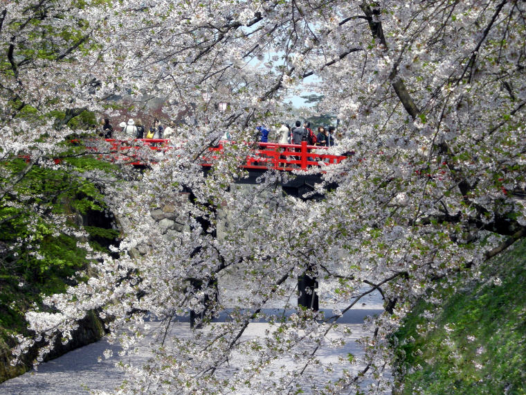 Hirosaki, Cherry Blossoms, Hirosaki, Cherry Blossoms Spots in Japan that are off the tourist trail, ©JNTO, Cherry Blossoms Spots in Japan that are off the tourist trail