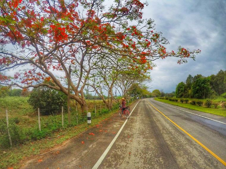 Cycling route along rice fields in Chiang Mai, What to Do in Chiang Mai: 5 Insider's Tips by Local Experts