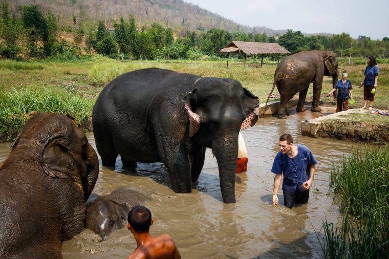 Elephant bathing at ethical elephant sanctuary in Chiang Mai, What to Do in Chiang Mai: 5 Insider's Tips by Local Experts