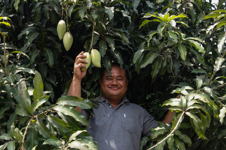 Mango picking with local uncle near Mahasawat Canal, Best Day Trips from Bangkok: 6 Insider's Tips by Local Experts