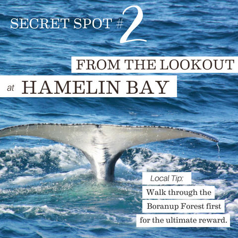 From the Boranup Lookout Over Hamelin Bay, 5 Whale-y cool secret spots for whale watching in the Margaret River