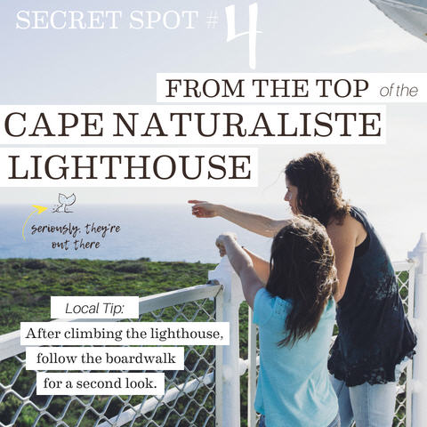 From the Top of Cape Naturaliste Lighthouse, 5 Whale-y cool secret spots for whale watching in the Margaret River