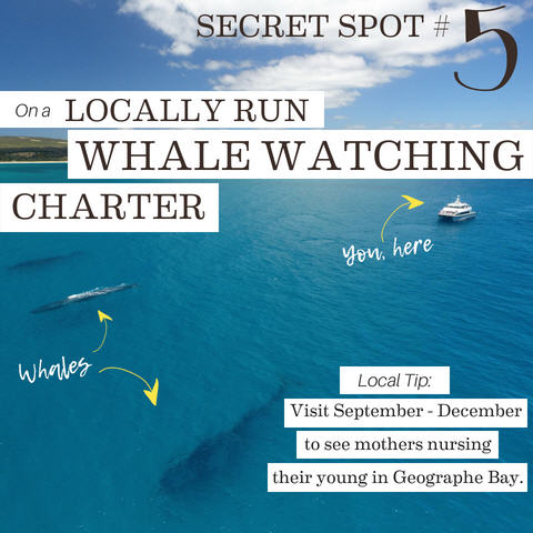 On a Locally Run Whale Watching Charter, 5 Whale-y cool secret spots for whale watching in the Margaret River