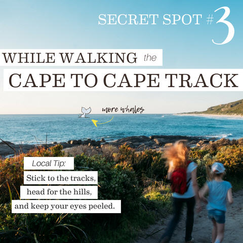 While Walking the Cape To Cape Track, 5 Whale-y cool secret spots for whale watching in the Margaret River