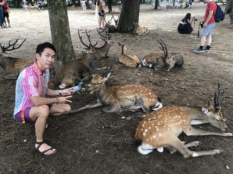 Deer and I, Nara, 6 Days 5 Nights Osaka, Kyoto and Tokyo Trip
