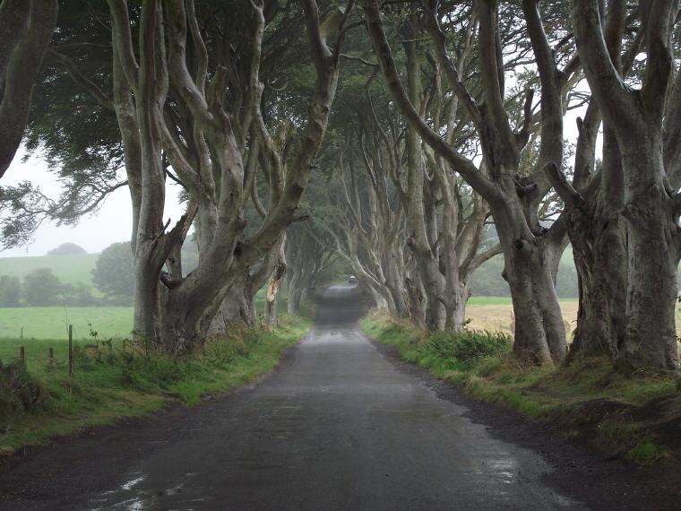 Dark Hedges, Game of Thrones, Film Location Road Trip, UK